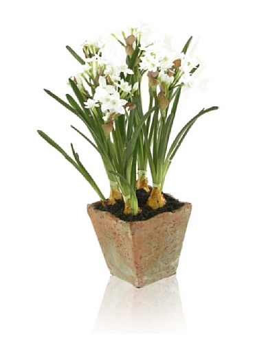 New Growth Designs Faux Paperwhites in Square Terra Cotta Pot, White