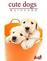cute dogs19 Golden Retriever