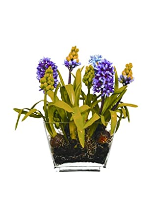 Winward Hyacinth in Glass Planter