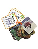 Animal Planet 3D Flash Cards - Wild Animals
