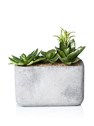 Laura Ashley Faux Succulents in Clay Container (Green)