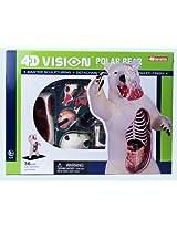 4 D Vision Polar Bear Anatomy Model By 4 D Master