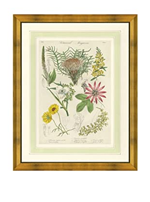 1837 Antique Hand Colored Pink Botanical Print III, French Mat