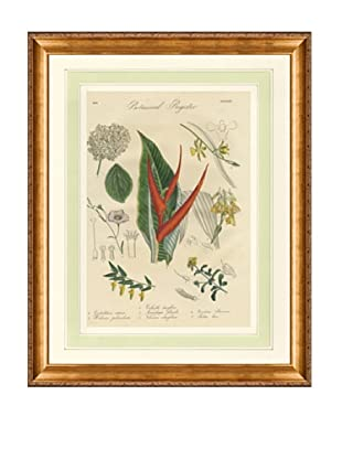 1837 Antique Hand Colored Red Botanical Print V, French Mat
