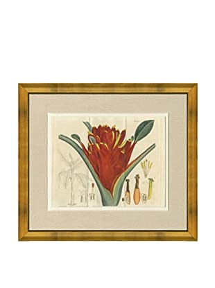 1813 Antique Hand Colored Red Botanical, French Mat