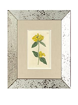 1816 Antique Hand Colored Yellow Botanical, Mirror Frame