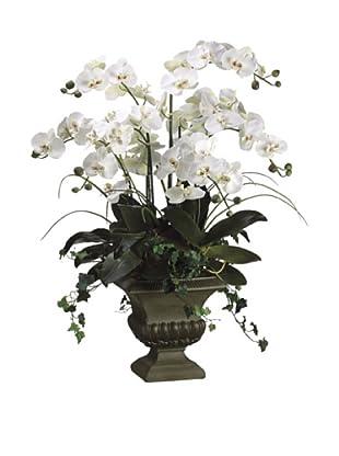 Allstate Floral Phalaenopsis in Fiberglass Urn, Cream Green