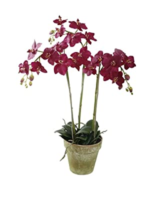 Winward Faux Phalaenopsis Orchid Bunch in Terracotta Pot, Fuschia