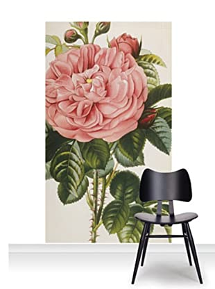 Royal Horticultural Society Rosa Baronne Prevost Mural (Accent)