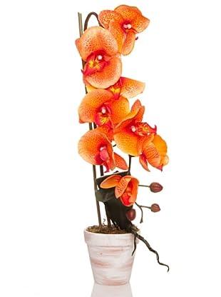 Concoral Maceta Orquídea Naranja