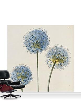 Royal Horticultural Society Allium Caeruleum Mural, Standard, 8' x 8'