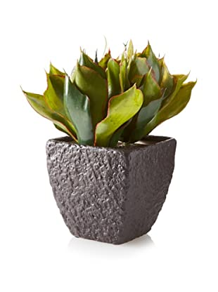 Winward Potted Star Agave Plant, Green
