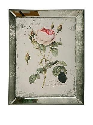 Winward English Rose I Framed Print