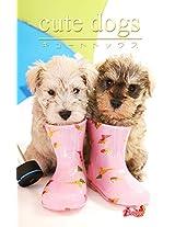 cute dogs20 Miniature Schnauzer