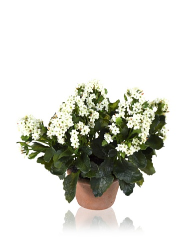New Growth Designs Faux Kalanchoe Plant in Terra Cotta Pot, White