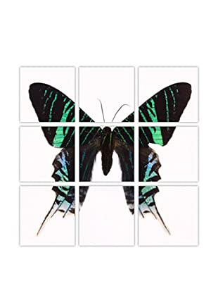 Art Addiction Acrylic Printed Green Butterfly, Polyptych