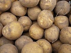 豆知識「実は毒がある身近な食べ物」