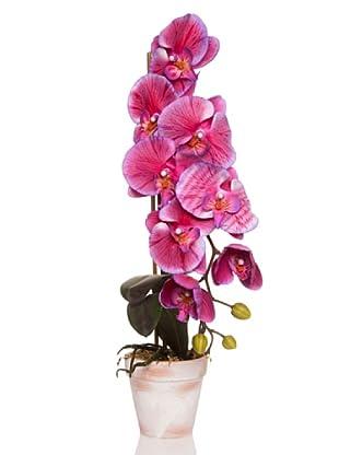 Concoral Maceta Orquídea Violeta