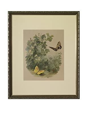 1880s Flowers & Butterflies