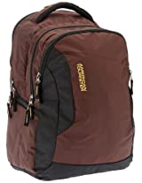 American Tourister Buzz Nylon Brown and Black Laptop Backpack