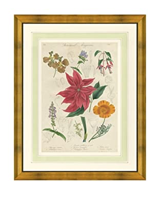 1837 Antique Hand Colored Red Botanical Print III, French Mat