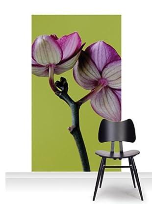 Clive Nichols Photography A Doritaenopsis Orchid III Mural (Accent)