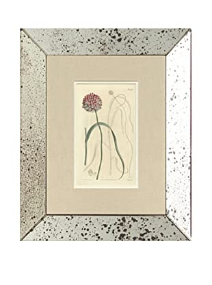 1813 Antique Hand Colored Pink Botanical II, Mirror Frame