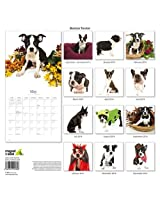 Boston Terrier 2014 Wall Calendar