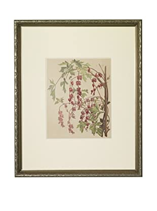 1903 Bleeding Heart Botanical Chromolithograph