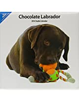 Chocolate Labrador 2014 Wall Calendar