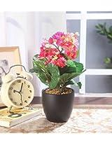 Fourwalls Premium Range Primula Flowers in a Ceramic Vase (32 cm, Light Pink)