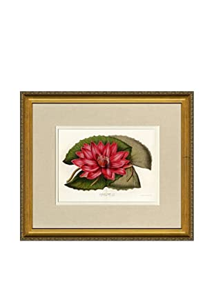 Vintage Print Gallery Antique Hand-Finished Nymphaea Rubra Print, Circa 1850's