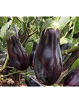 Indo-American Hybrid Seeds F1 Hybrid Black Star Seeds