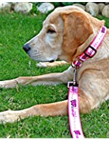 Bold and Beautiful Martingale Collar & Leash Set-S