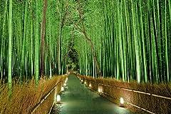 竹の花はいつ咲く?
