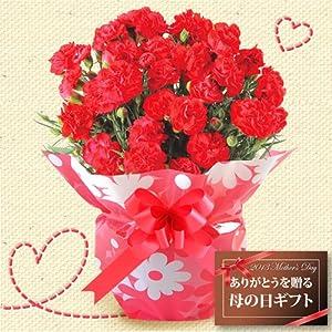 【送料無料!母の日ギフト】赤カーネーション5号鉢【お届5/7-5/12】写真