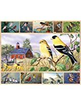 White Mountain Puzzles Songbirds 1000 Piece Jigsaw Puzzle By White Mountain Puzzles