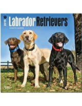 Labrador Retrievers 2015 Wall