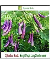 Splendour Seeds Brinjal purple slender (200 seeds)