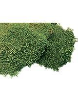 Super Moss 21551 Preserved Sheet Moss, Fresh Green, 4-Ounce