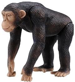 チンパンジーに人権なし…アメリカの裁判所が判決