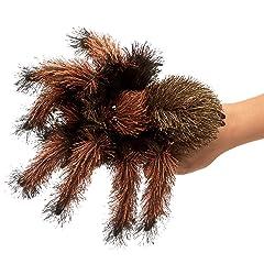 体長30センチ!世界一大きな蜘蛛が発見される