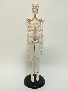 教育者の鑑!? 理科室の骨格標本「50年前に死んだ校長先生だった」