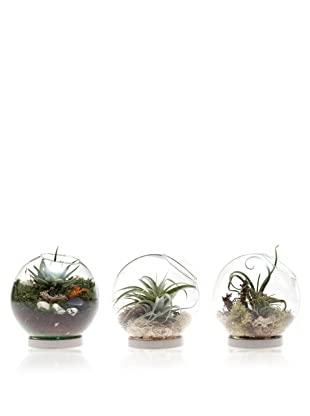 Chive Set of 3 Table Terrariums with Base