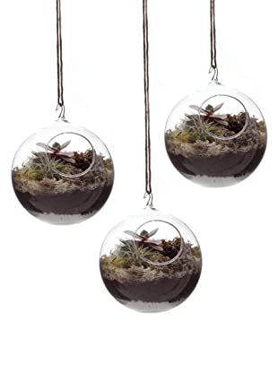 Chive Set of 3 Hanging Terrariums, Clear