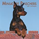 Miniature Pinschers 2007 Calendar